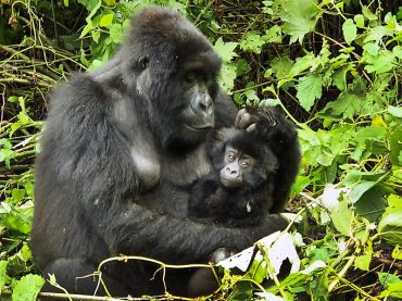 Virunga Ecosystems Need Your Support