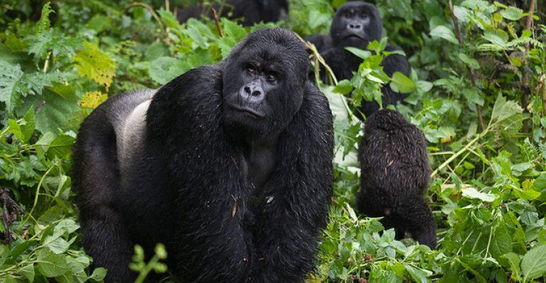 How Best To Visit Virunga National Park, Congo?